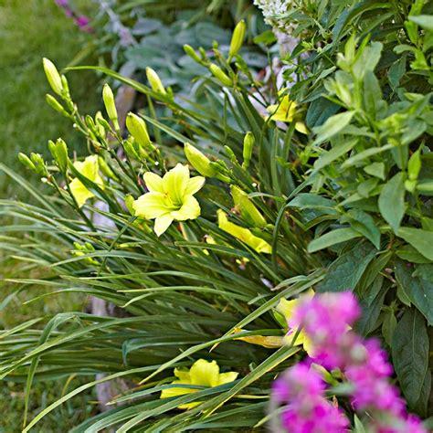 10 easy perennials anyone can grow