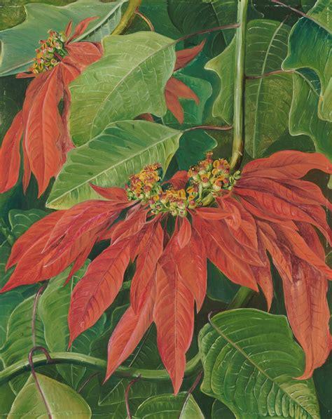 Fendi With Flower Size 28 X 23 Cm Rp 4750000 60 flor de pascua or easter flower at morro velho brazil