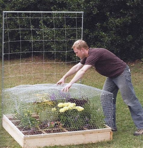 build a square foot garden wired how to wiki amazoncom gardman 7662 fruit cage large 118 long x 78 wide