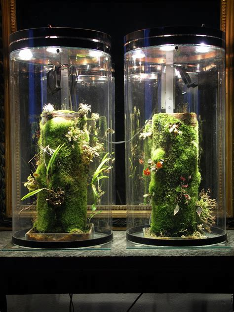 Akar Moss Bonsai By Aqua City ready set go vivarium