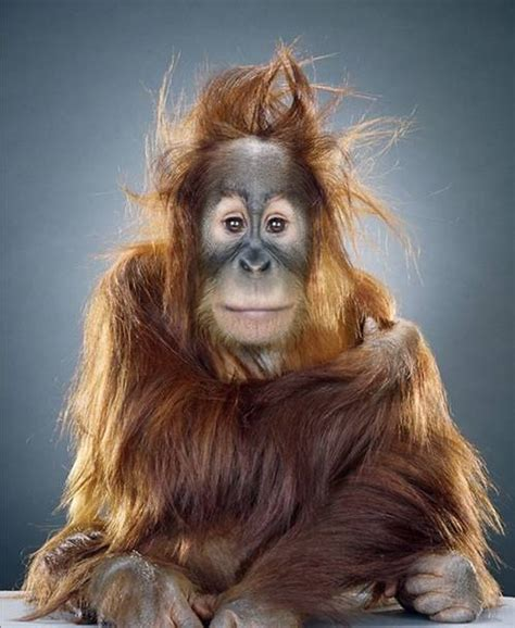 These Are Bad Hair Days by Bad Hair Day Klugster Jokester