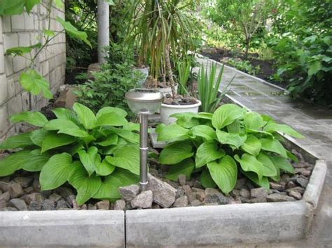 Landscape Ideas With Hostas 21 Ideas For Beautiful Garden Design And Yard Landscaping