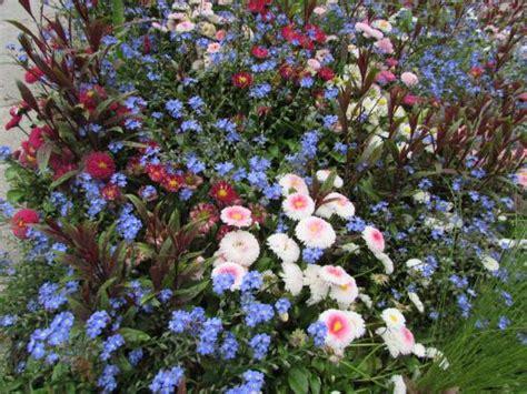 rome co di fiori garofani e fiori di co picture of i giardini di