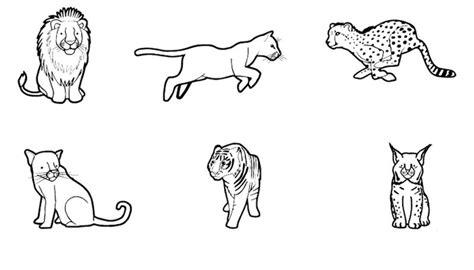 juegos de felinos para colorear imprimir y pintar felinos dibujo para colorear e imprimir