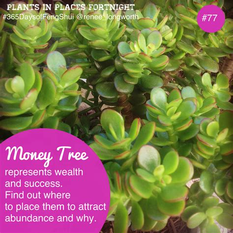 what is the feng shui of plants in the bedroom day 77 of 365 days of feng shui money tree