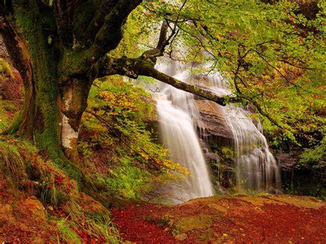 forest waterfall wide desktop background wallpapers13 com