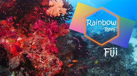 rainbow reef fiji youtube
