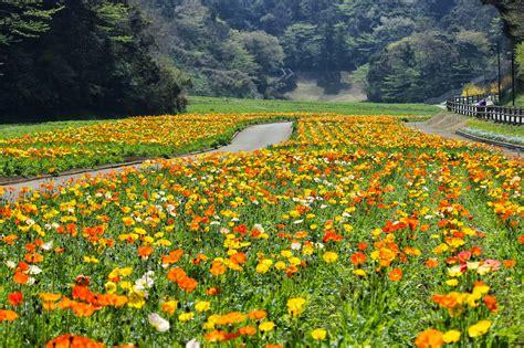 Sunflower Field kurihama flower world flowers relaxation and godzilla