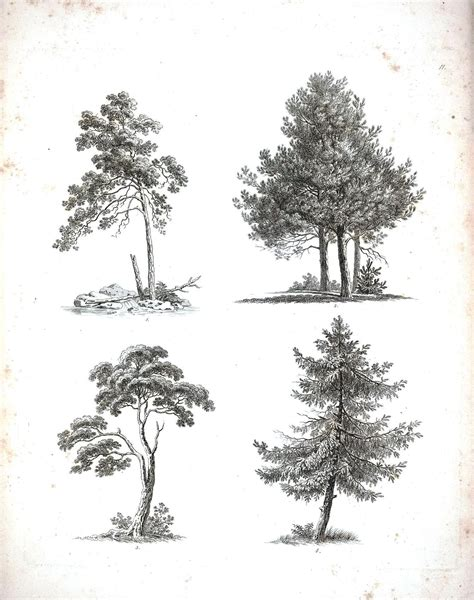 Drawing Trees by Simple Sketch Tree Black And Whit Simple Tree Tree