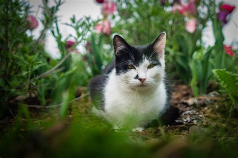 how to keep a cat out of a room 10 ways to keep cats out of your yard