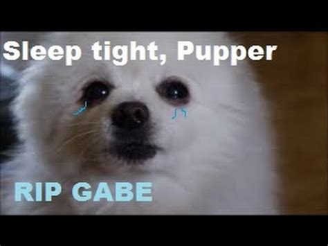gabe the meme rip gabe tribute for gabe the quot meme supreme quot