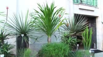 plantas altas de interior plantas altas de interior amazing se caen las hojas la