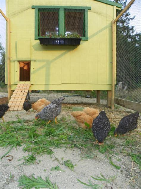 chicken farm house design free downeast thunder farm chicken coop plans downeast thunder farm