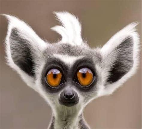 imagenes animales divertidos v 237 deo graciosos de animales a divertirse aminales