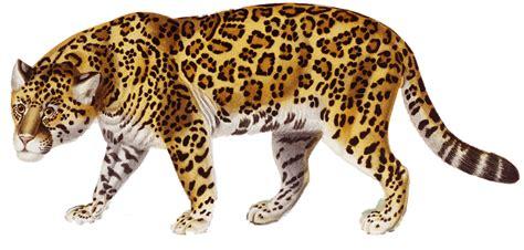 jaguarexecutivetours com