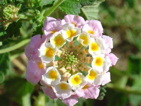 imagenes flores raras fotos de flores raras imagui