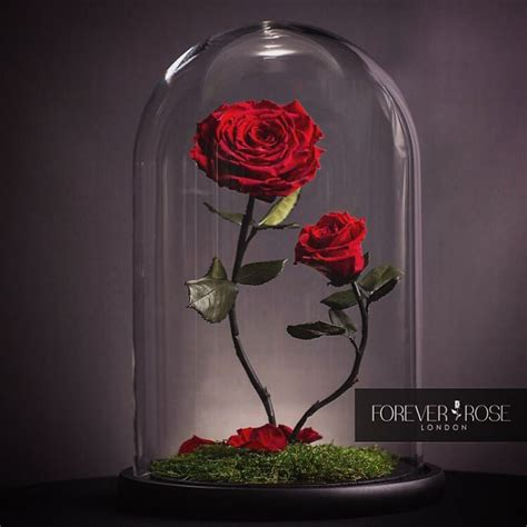 forever roses london real beauty and the beast roses exist and they ll last