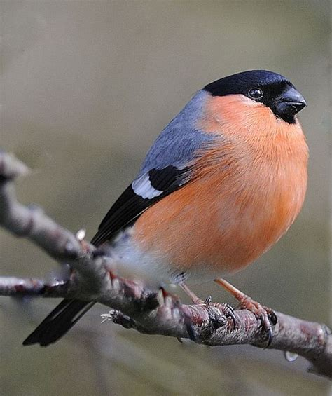 finch website 25 best ideas about finches on pretty birds