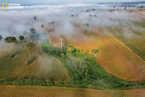 Natgeo World 5 national geographic 5 steps to feed the world kcur
