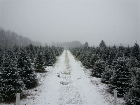 family grown high quality christmas trees sandstone mn