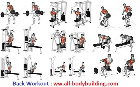 creatine a workout routine mass building back workout how many is octa