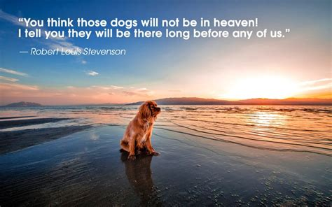 pets in heaven gift for owners dogs and heaven ohmydoggies