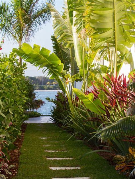 Tropical Garden Houzz Tropical Patio Plants
