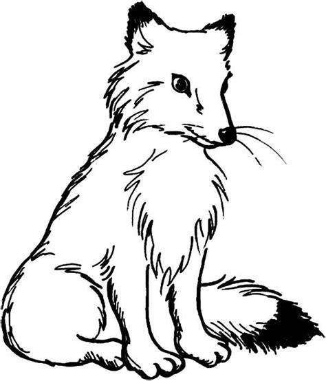 coloring page arctic fox kindergarten arctic fox coloring page popular arctic fox