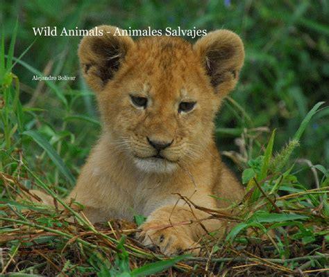 imagenes de animales wikipedia wild animals animales salvajes by alejandro bol 195 173 var