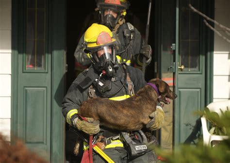 dog house vancouver dog rescued from vancouver house fire dies the columbian