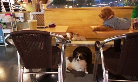 puppy cafe los angeles l a s the caf 233 where coffee and canines up for adoption meet animal fair