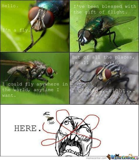 Fly Meme - image gallery fly meme