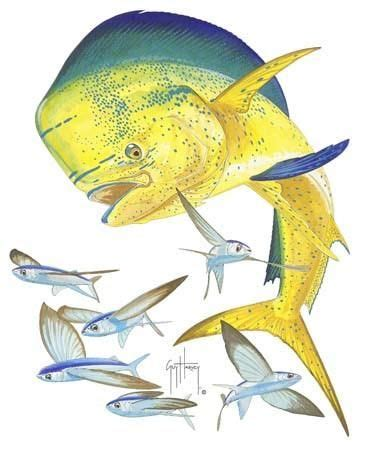 mahi mahi tattoo dorado tattoos search fishing fish