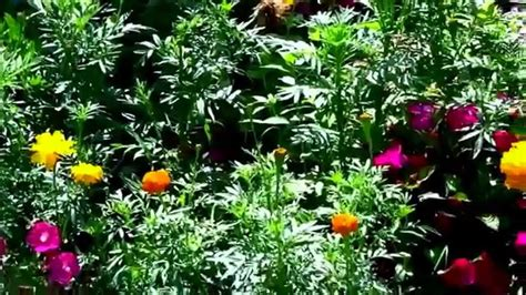 low cost low maintenance flower garden