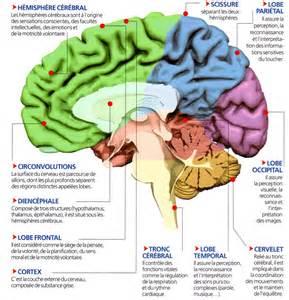 le cerveau si 232 ge de l intelligence la mesure de l