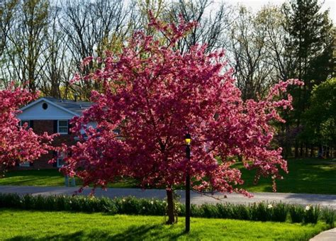 best trees for backyard best small trees for landscaping front yard
