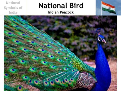 National Bird Of India Essay by National Symbols Of India