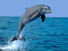 Can Blind People Swim Dolphin