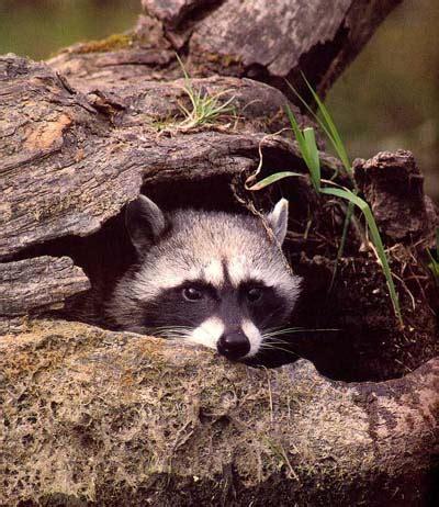 what s in your backyard wildlife of landen