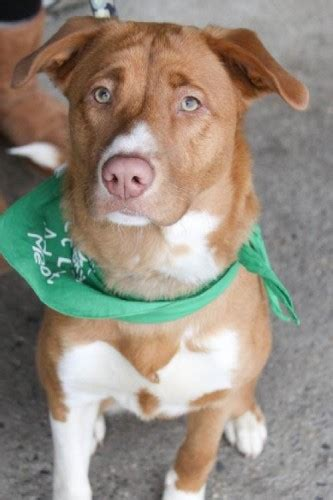 lucky animal rescue your monthly adoptable animal fix popville