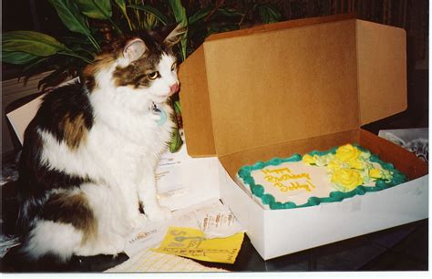 ideas for a cat cat birthday