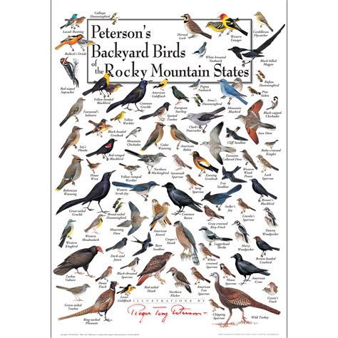 peterson backyard birds peterson backyard birds foldingguides peterson s backyard