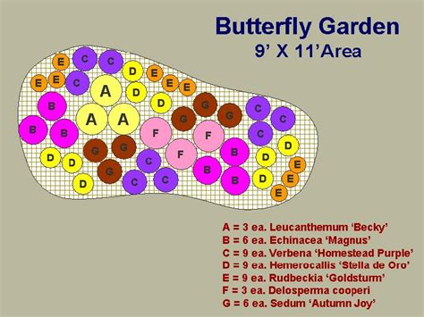 Butterfly Garden Layout Butterfly Garden Plan Garden Pinterest