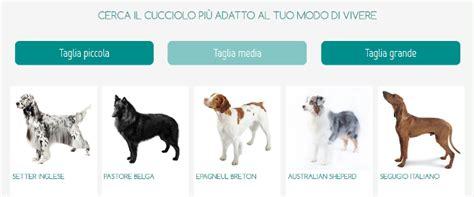 elenco cani da appartamento le 10 razze di cani pi 249 adatte ai bambini petpassion