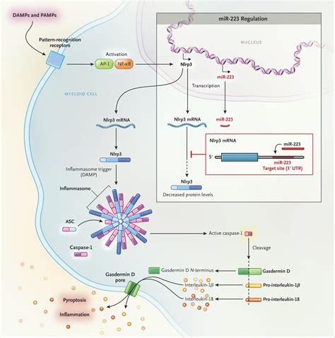 Pattern Recognition Receptor Inflammatory Bowel Disease | inflammatory bowel disease and the nlrp3 inflammasome nejm