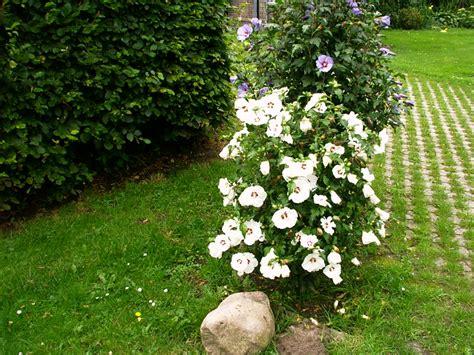 Hof Und Garten by Ferienwohnung Zur Rotbuche Bilder Hof Und Garten