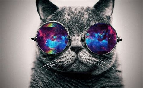 wallpaper cat 3d glasses cat galaxy glasses u go cat galaxy animals and other