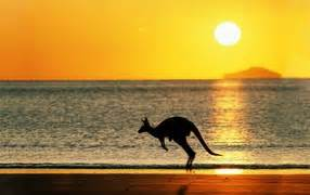 kangaroo rubber st animals photo wallpapers pictures with animals page 2