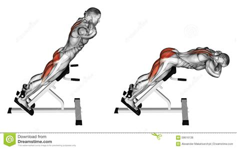 45 Degree Back Extension Bench Exercising Hyperextension Stock Illustration Image