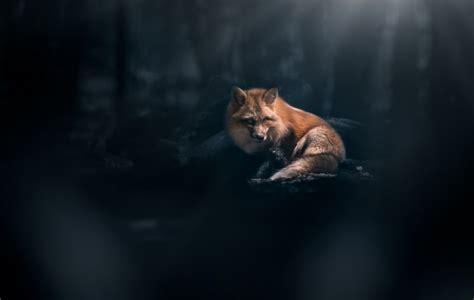 fox forest dark theme majestic